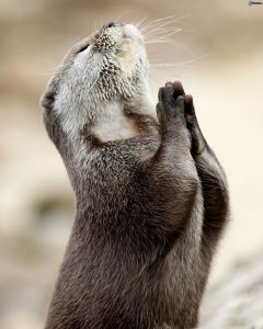 Praying for result